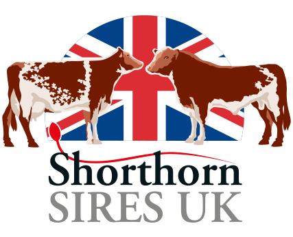 Shorthorn Sires UK
