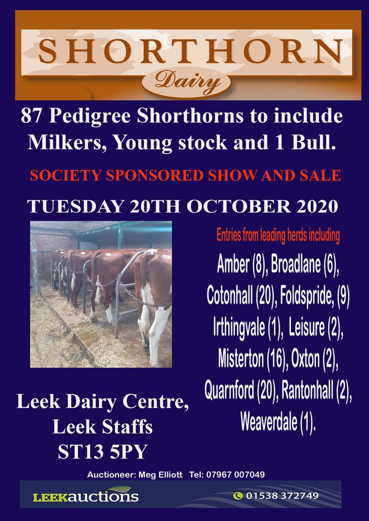 87 Pedigree Shorthorn – Leek Sale 2020