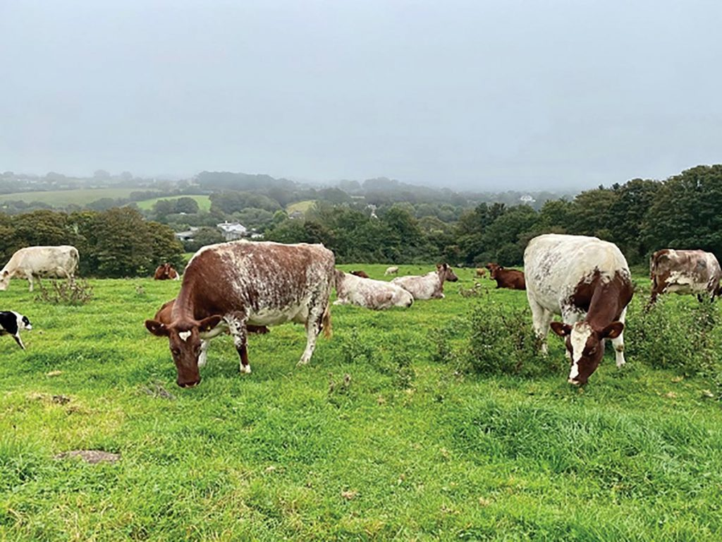South Western Counties Shorthorn Breeders Association Herd Competition 2020
