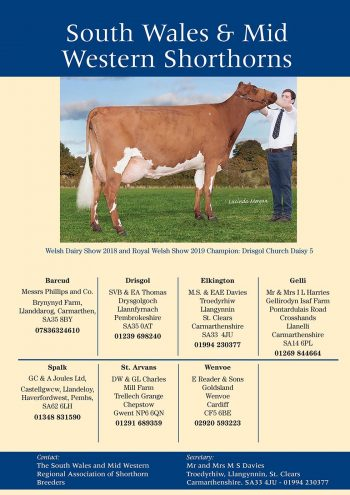 Dairy Shorthorn Journal 2020.indd